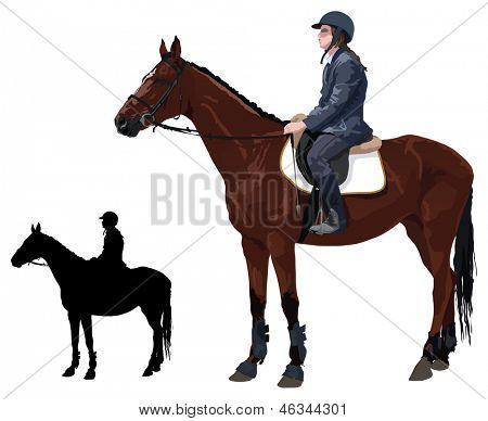 Horse with jockey lady, color vector illustration on white background.