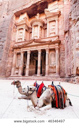 Camels in front of Al Khazneh in Petra, Jordan