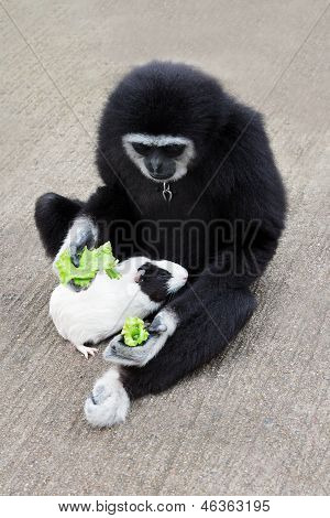Monkey Feeding Guineapig