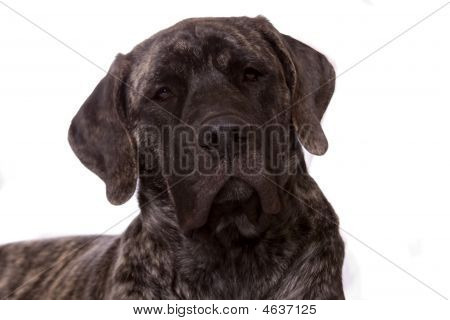 Cachorro hermoso