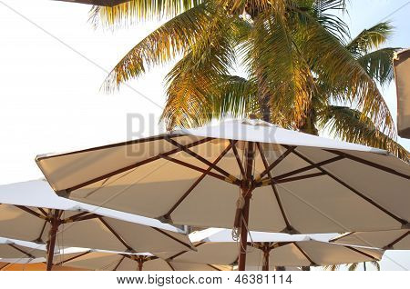 Parasols and palms