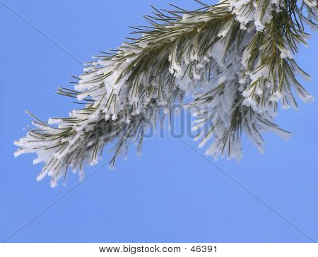 Branch On The Blue-sky Background