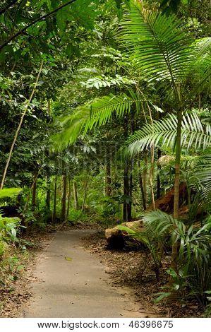 Rain forest Path 1