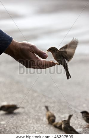 Bird Feeding Hand With Wonderful Available Light