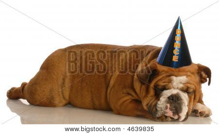 Bulldog With Dunce Cap