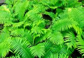 picture of photosynthesis  - A fern on a full background. A green fern leaves.