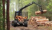 picture of logging truck  - The harvester working in a forest - JPG