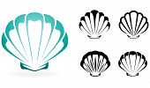 image of scallop-shell  - Shell collection  - JPG