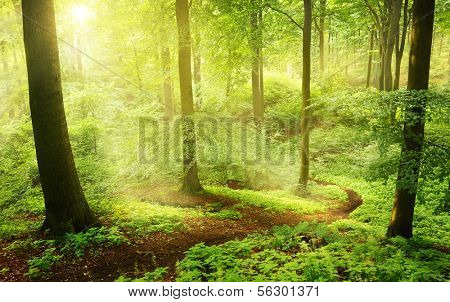 Foggy morning in a green summer forest in Germany