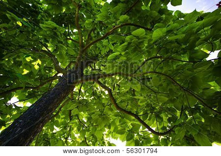 foliage of a tree, symbol photo for growth and natural