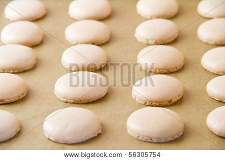 Macaron Shells On Baking Sheet