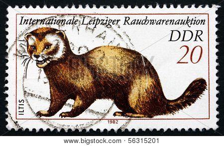 Postage Stamp Gdr 1982 European Polecat