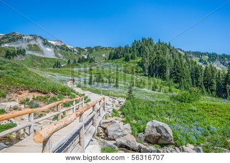 Mountain Hiking Trail Wildflowers