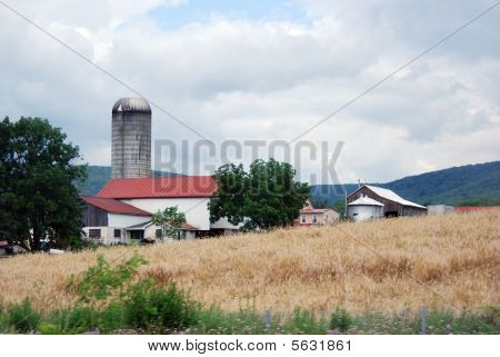 Roadside Farm