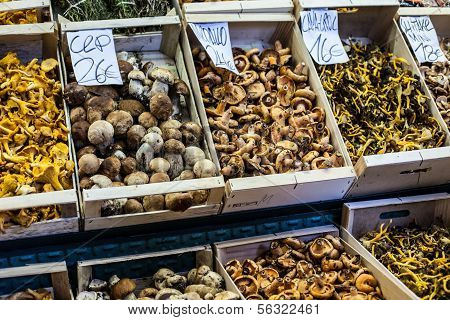 Dried Mushrooms In A Market, In La Boqueria, Market Barcelona