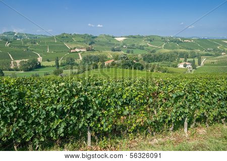 Landscape near Asti in Piedmont,Italy