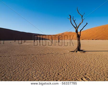 Acacias muerto y rojas dunas del desierto de Namib