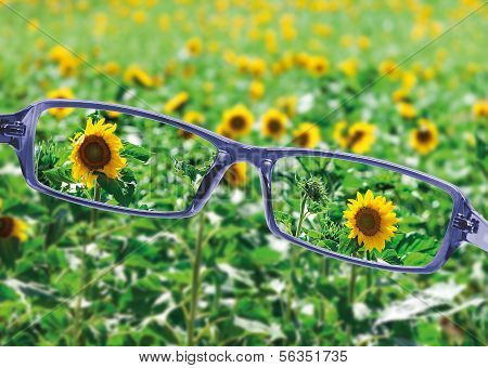 View From Reading Eyeglasses On Beautiful Nature View