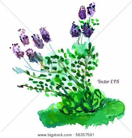 Beautiful lilac bush