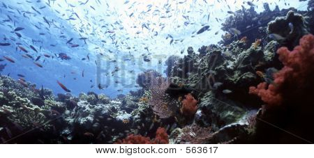 Beqa Shallow Reef
