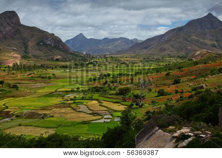 Green valley with rice fields. Madagascar