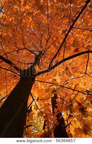 Look up in the autumn forest...