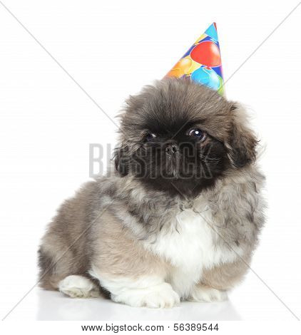 Pekingese Puppy In Party Cone