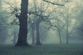 image of coniferous forest  - Foggy day - JPG