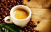 pic of coffee coffee plant  - Coffee - JPG