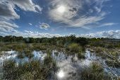 image of marshlands  - Scenic landscape in the Florida Everglades National Park during the winter - JPG