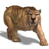 stock photo of saber tooth tiger  - saber - JPG