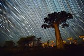 picture of baobab  - Baobab and night sky with star trails - JPG