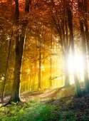 pic of amaze  - Amazing abstract forest scene with shining sun - JPG