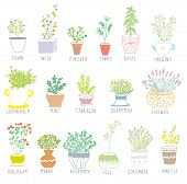 stock photo of oregano  - Herbs and spices set in pots with flowers illustration - JPG