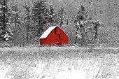image of red barn  - Winter barn scene at Gatineau Park black white and red - JPG
