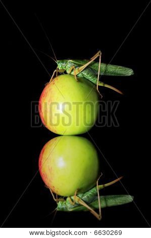 Locust climbed on the green fruit