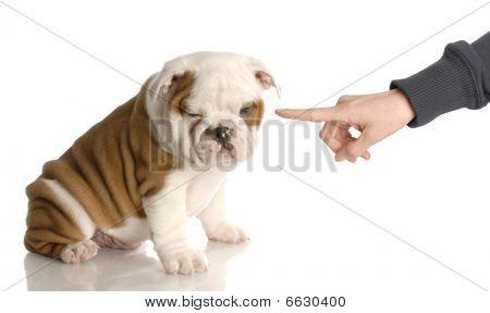 Finger wackelt bei schlechten Bulldog