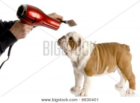 Hand With Brush And Blower On Puppy