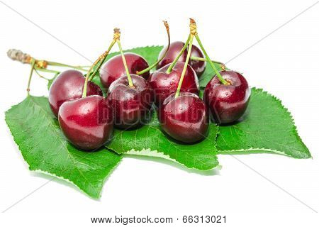 Dark Vinous Ripe Sweet Cherry Juicy Tasty Berry
