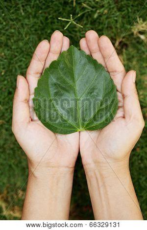 Hands Holding Heart Shape Leaf