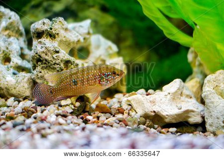 Beautiful Little Aquarium Fish
