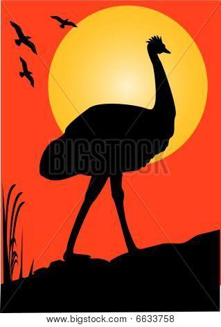 Emu Orange Sunset