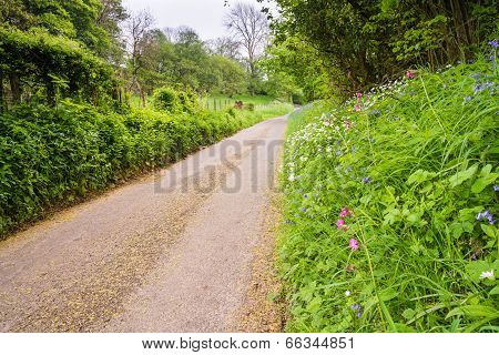 Country Road With Wildflowers
