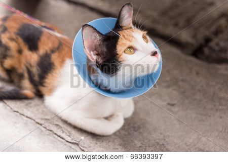 cat wearing blue protective buster collar
