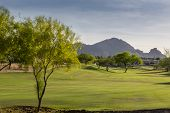 foto of mesquite  - Evening falling over the Scottsdale Greenbelt with grass and Palo Verde and 