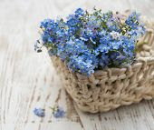 picture of forget me not  - Bouquet of spring forget me not flowers in basket - JPG
