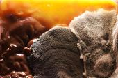 stock photo of eukaryote  - Fungus growing in the old food in the refrigerator - JPG