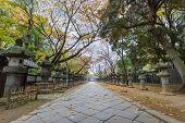 picture of shogun  - Toshogu Shrine at Ueno Park in Tokyo - JPG
