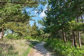 image of tallgrass  - Trail through the woods Strong City Kansas - JPG