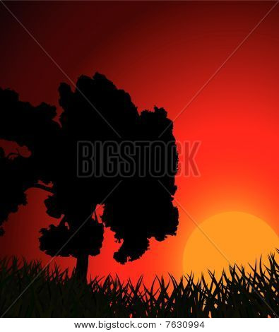 Silhouette of a tree against a sunset